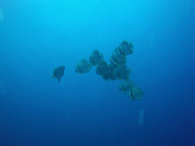 Batfish, SS Thistlegorm