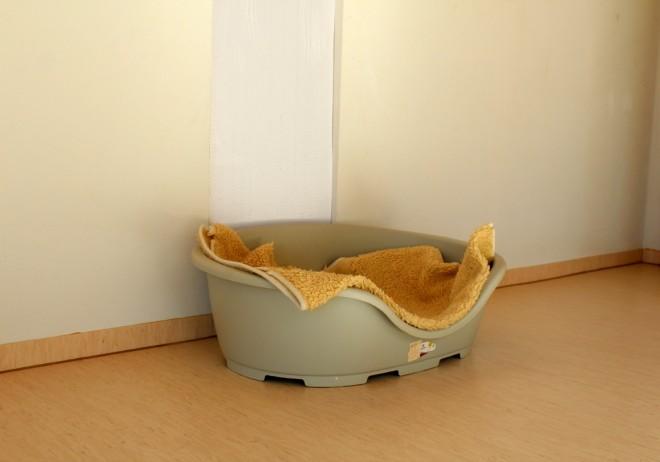 Um hotel para cachorro, por Packing my Suitcase.