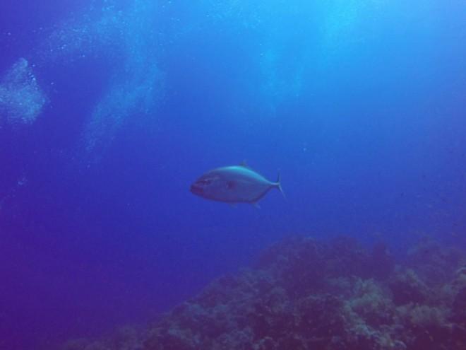 Atum, Yolanda & Shark Reef
