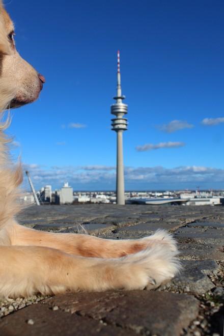 Enzzo e a Torre Olímpica