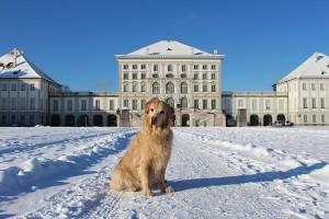 Cachorro em Munique