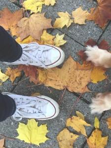 Sapatos e patas