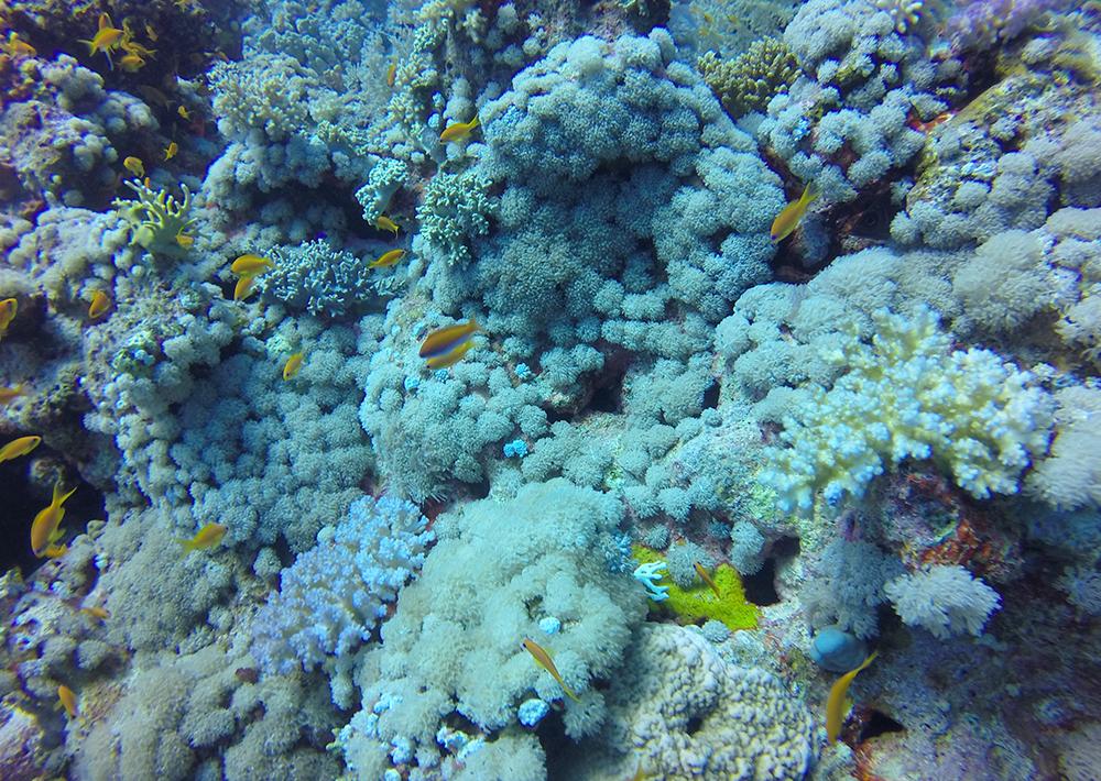 Mergulhando no Egito para iniciantes