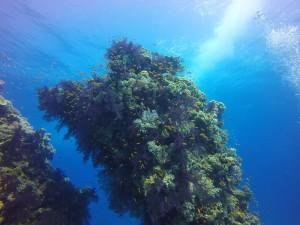 Mergulhando no Egito