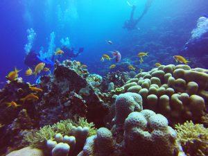 Mergulho Hamata Egito