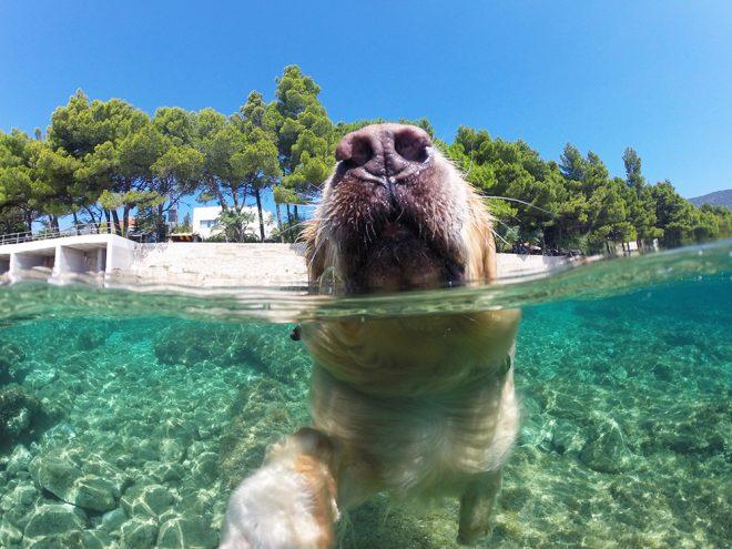 Croácia com cachorro
