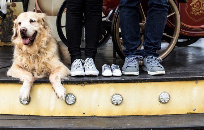 Revelação de gravidez com cachorro