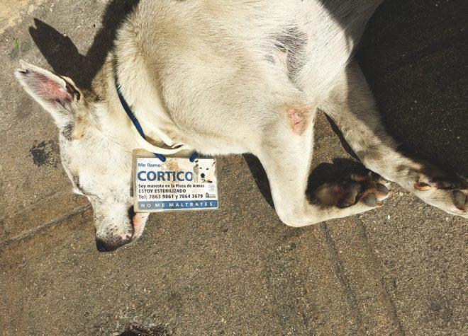 cachorro em Cuba