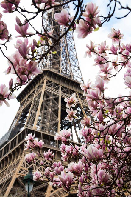 Torre Eiffel e magnólias