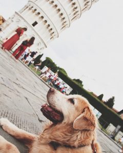 Cachorro em Pisa Itália