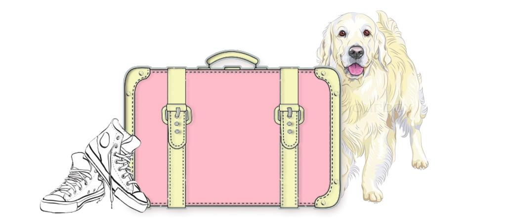 Meu cachorro viajante