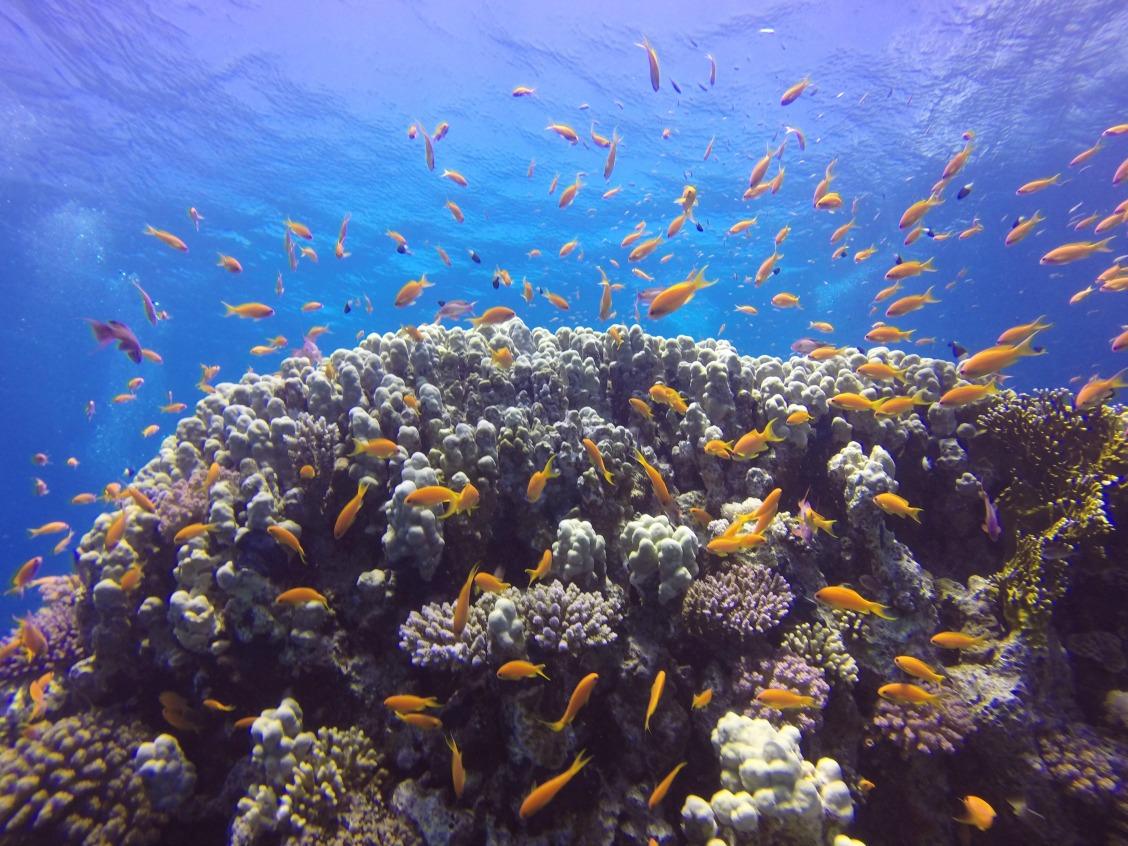 Mergulhando em Sharm-El-Sheikh, Egito