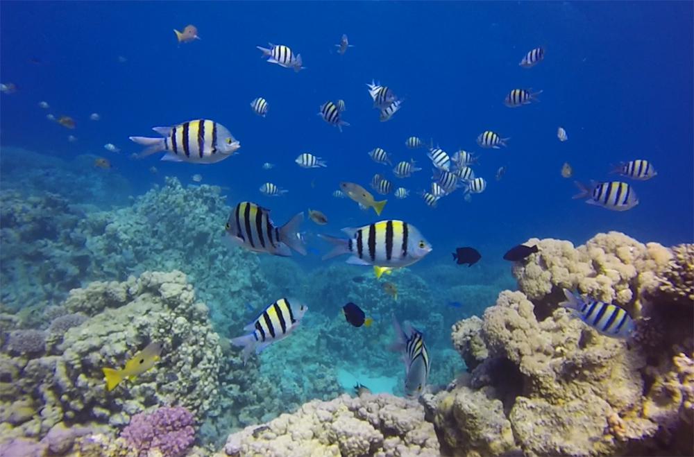 Mergulhando em Hamata, Egito
