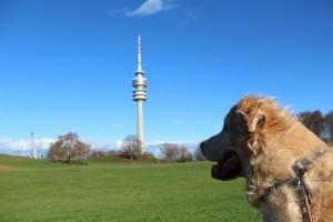 Cachorro na Alemanha